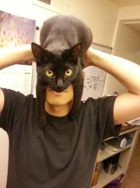 cat-man01