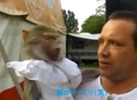 monkey-and-guy-screaming02