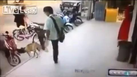 sleeping-dog-revenge02