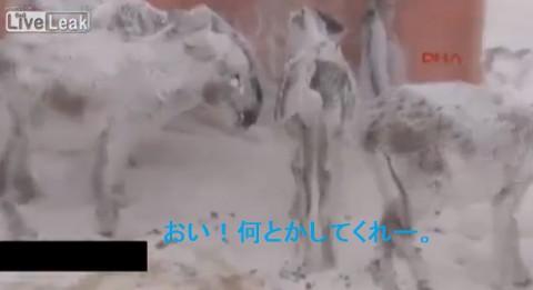 brozen-donkeys02
