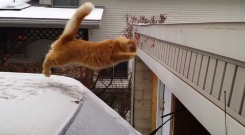 cat-fails-jump02