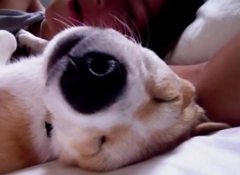 laziest-puppy02