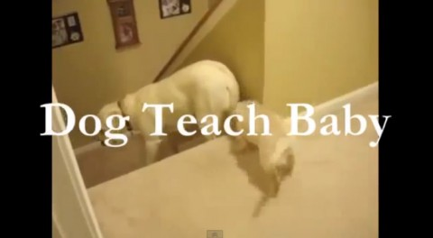 dog-and-cat-teaching01