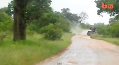 elephant-rolls-car02