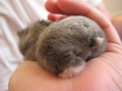 hamster-butts05