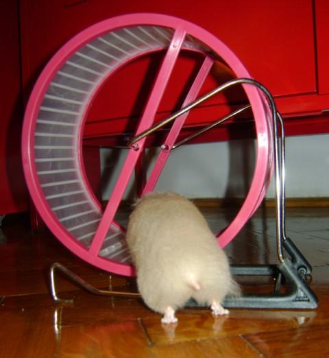 hamster-butts11