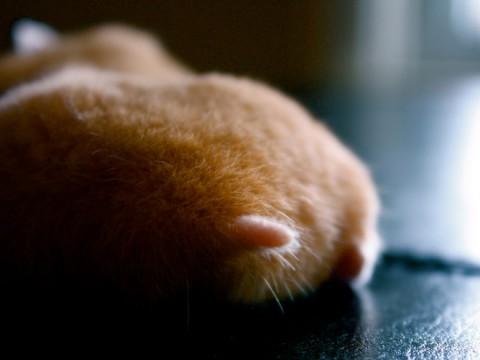 hamster-butts12