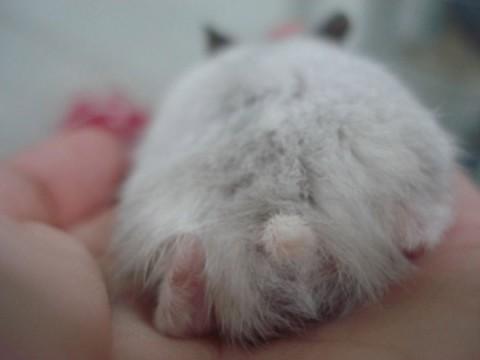 hamster-butts14