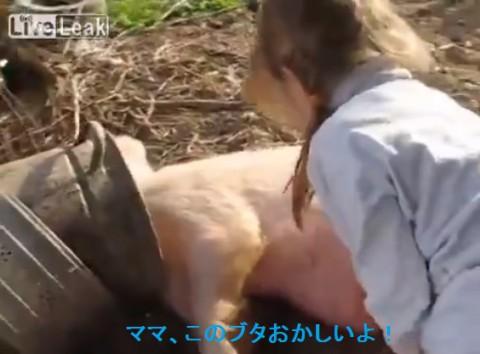 pig-tickler02