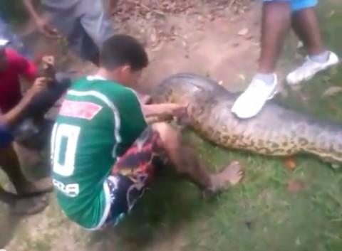 anaconda-killed-pitbull02