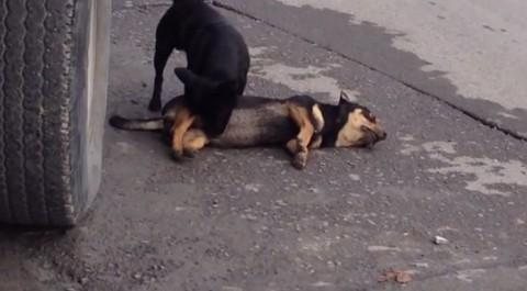 dog-traffic-accident02