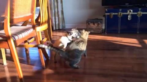 pug-vs-cat02