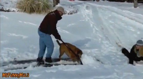 shovel-snow-dogs02