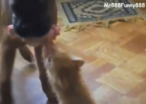 funny-cat-wants-food02