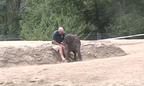 baby-elephant-sits02