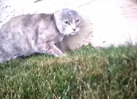 cat-cam-cat-fight02