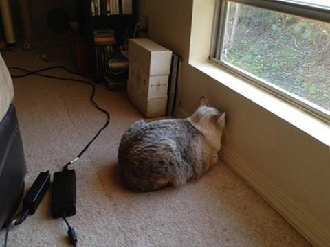 wall-cats01