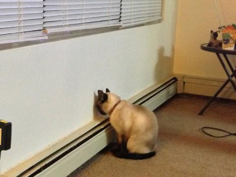 wall-cats03