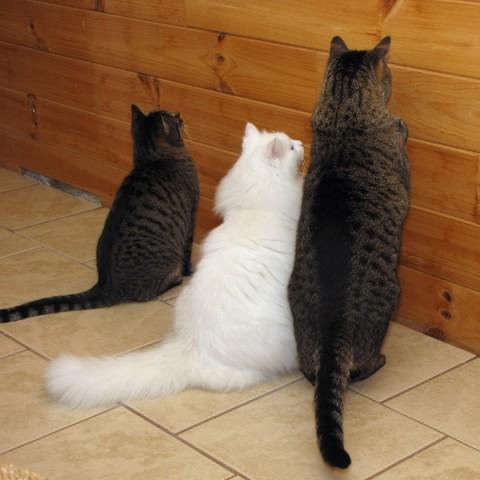 wall-cats04