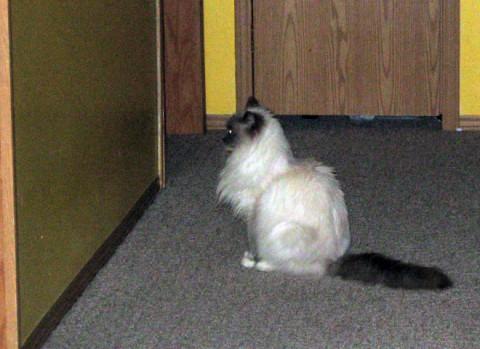 wall-cats05