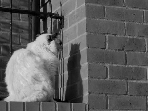 wall-cats06