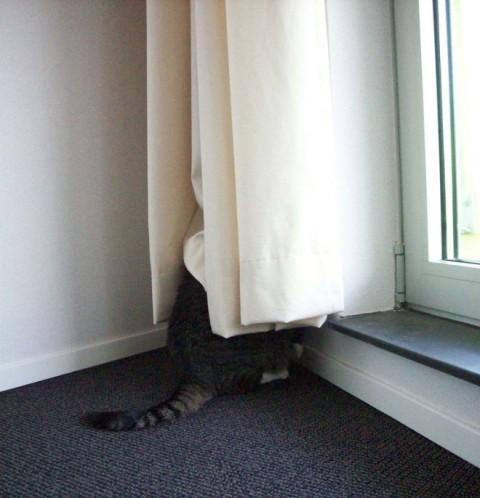 wall-cats07