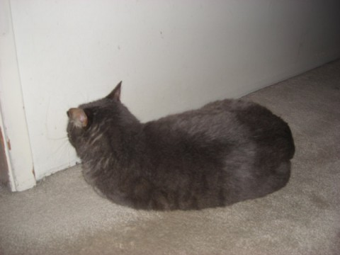 wall-cats08