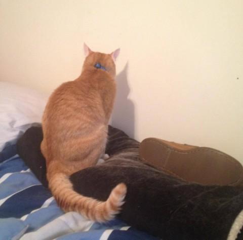 wall-cats09