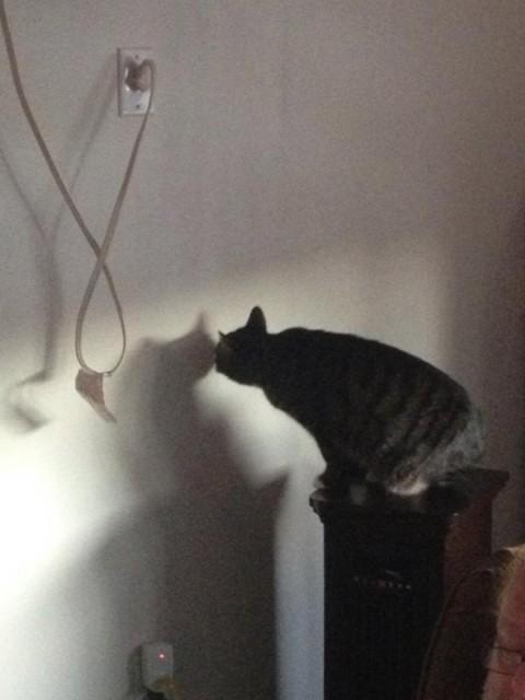 wall-cats10