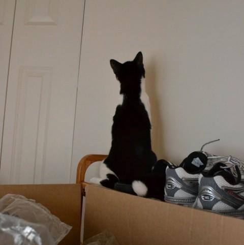 wall-cats11
