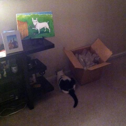 wall-cats12