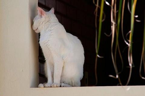 wall-cats15