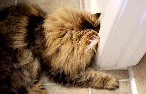 wall-cats16