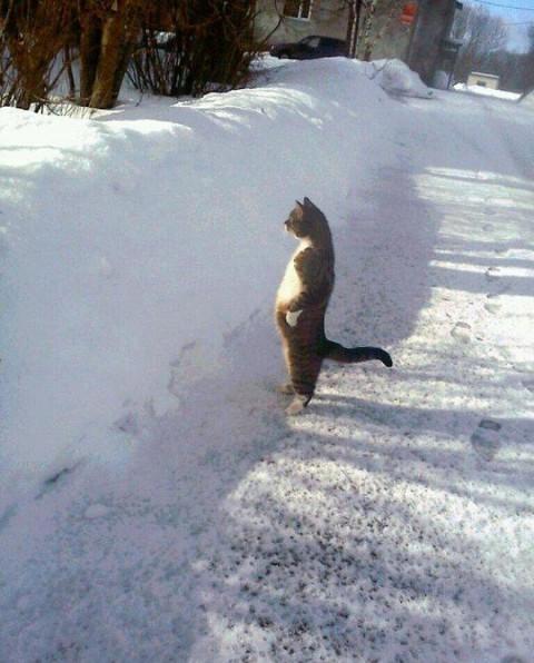 wall-cats17