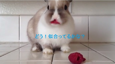 bunny-eating-raspberries02