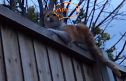 cat-replies-to-hello02