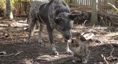 dog-befriends-disabled-kitten01