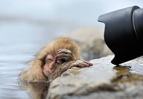 hungover-animals12