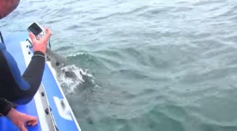 shark-attacks-boat02