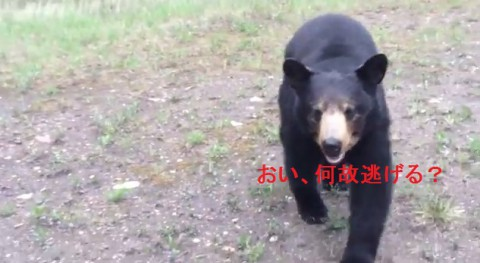 black-bear-encounter02