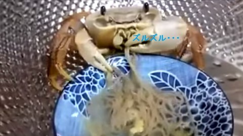pet-crab-eating02