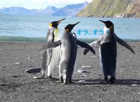 penguin-fight02