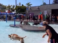 pooch-pool-party01