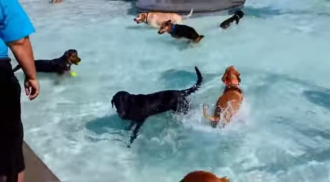 pooch-pool-party02