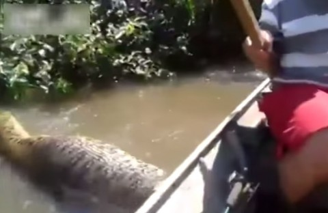 biggest-anaconda-ever-found03