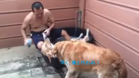 dog-spa02