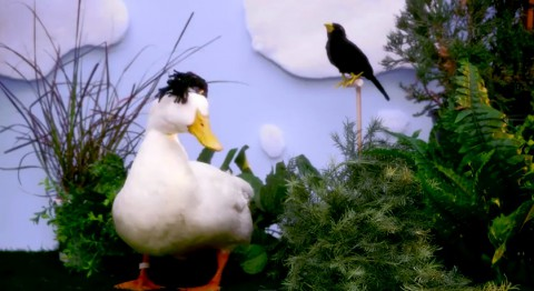 duck-tales-with-real-ducks03