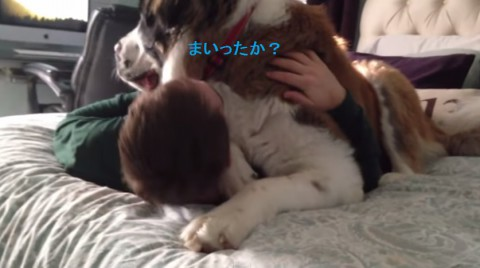 huge-dog-being-needy02