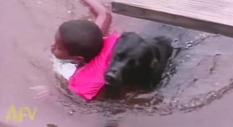 rescue-dog-saves-kid01