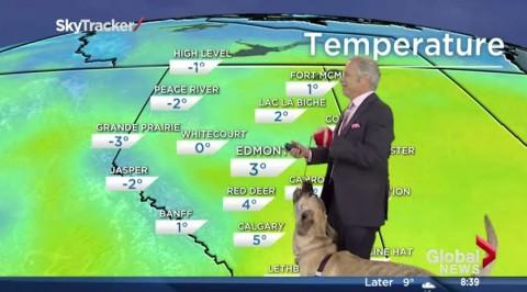 dog-news-blooper03